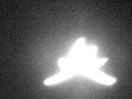 【衝撃】「ヒトデ型の巨大天使」がカナダ上空に出現、激撮される! 強烈に光り輝く謎の物体、触手もクッキリ、UFOか?