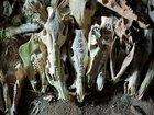【閲覧注意・九州】2万体の頭蓋骨を祀る聖地「シシ権現」!  骨には鮮血が滴り、肉片も…現地取材!