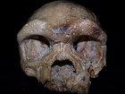 人類の起源は東アジアか? 中国で発見された26万年前の頭蓋骨「ダーリー・スカル」がアフリカ誕生説を覆す可能性