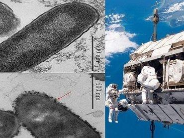 """【歴史的発見】""""未知の生命""""が国際宇宙ステーションで採取される! ついに人類とエイリアンが邂逅、露宇宙飛行士が緊急発表"""
