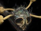 【衝撃画像】最凶にキモい昆虫ゾンビ3選! キノコが生えたゾンビバエ、尻に触手を生やした蛾…!