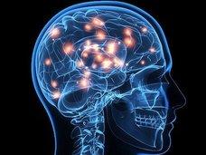 脳に情報を直接入力する方法が見つかる