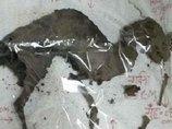 【速報】完璧な恐竜のミイラ(化石ではない)がインドで発見される! 6500万年前の姿そのままのレベル!