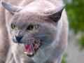 【科学】イヌやネコは人間には見えない「波長」が見えていた! 何もない所を見つめる謎が解明=ロンドン大学研究