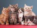 ネコの毛色でわかる、飼い主に与える特別な影響8! 三毛猫は幸運と繁栄を招き、サビネコは癒やしを与える…!?