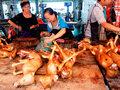 """中国""""犬食""""文化の断末魔! 業者の相次ぐ廃業と、毒針で飼い犬を殺して持ち去る「闇ルート」の存在"""