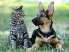 「犬と猫、賢いのはどっち」圧倒的な差で問題に終止符! 米大学の研究で判明された衝撃内容とは?