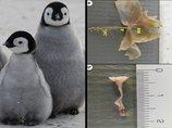 【ガチ】米政府が「氷漬けのペンギンの松果体」を爆買い、ウィキリークスが暴露! 目的は一切不明、理学博士がコメント「超能力研究の可能性」