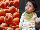 桃しか食べられない男の子、親は桃の確保に奔走 ー 新生児に急増する奇病「FPIES」の苦悩