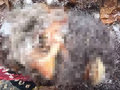 【UMA】ビッグフットの氷漬け頭部が公開される!「1953年に射殺した本物」人間に近い顔つき、生々しい切断面も