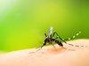 """【最新研究】蚊を訓練して""""人間を刺さなくさせる""""ことに成功! """"パブロフの蚊""""で最凶生物兵器も誕生か?"""