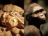 小さな足の初期人類「リトルフット」とは!? 人類最古の完全な骨格が再現され、衝撃の新事実が続々判明!
