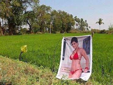"""【衝撃】インドの畑に""""セクシー女優のポスター""""を置いたら収穫激増!「豊作はおっぱいパワーのおかげ」"""