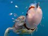 """【衝撃】ウミガメが超絶進化していたことが研究で発覚! いつの間にか前ヒレで「空手チョップ」するほど""""ヒト化""""していた!"""