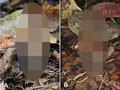 激レア「エイリアン・フラワー」が150年ぶりに発見される! 摩訶不思議な姿に戦慄(ティスミア・ネプトゥニス)