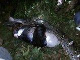 奇妙な場所で発見されたトンデモない死体と死因5選! エアダクト、樹木の中、ヘビの腹…!