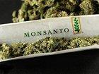【陰謀論】モンサントとバイエルの最凶合併でマリファナ種子独占か? 「遺伝子組換え大麻」ビジネスの裏にロックフェラー
