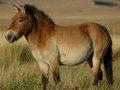 【悲報】 野生の馬はとっくに絶滅していたことが研究で判明! 家畜馬の起源にミッシング・リンクも