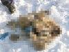【閲覧注意】ロシアで「54個の手首」が入った謎のバッグが発見される! 仰天の警察発表に国民困惑…背後にネオナチか?