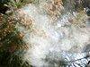 【警告】春に自殺が増える理由に「花粉」がガチ浮上! 花粉症は精神にも不調をきたしていた(最新研究)