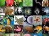"""現代版「ノアの箱舟」プロジェクト開始へ! 地球上の生物""""150万種""""の全ゲノム情報を記録… 壮大すぎる計画の全貌発覚!"""