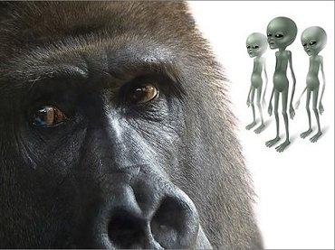"""地球外文明が見つからないのは「宇宙ゴリラ効果」のせいだった!? 科学的な人ほど真実が""""見えない""""、宇宙探査の盲点発覚!(最新研究)"""