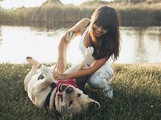 【ショック】犬はお腹を撫でられるのを楽しんでいないことが判明! 動物学者がガチ指摘「人間が喜ぶから耐えているだけ」