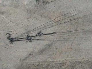【衝撃】エリア51で「謎の穴と黒い触手」が発見される! グーグルアースにハッキリ、宇宙人脱走の痕跡か?