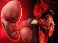 【速報】ヒトとニワトリのハイブリッド胚が作成される! 「鳥人間」誕生疑惑でロックフェラー大学研究が物議、理学博士が解説!