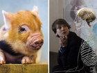 【警告】「脳だけで生きる豚」の実験成功、次は人間で実験!?「肉体のない脳は、死ぬより苦痛な運命」大学教授が警鐘