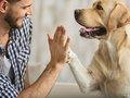"""犬は生まれつき人間を""""母親と同じように""""信頼していることが判明! それなのに人間は… 数千年にわたる愛と友情に涙(最新研究)"""