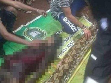 """【閲覧注意】体長8mニシキヘビに""""頭から丸呑みされた""""54歳女性の遺体に衝撃広がる! 絶句するほど恐ろしい映像=インドネシア"""