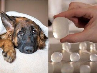 ペット向け「キンタマビジネス」で巨万の富を得た男が激ヤバ! 愛犬の失踪事件がもたらした奇跡のアイデアとは?