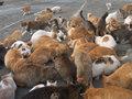「多頭飼育崩壊」猫45匹を飼っていた女性が強制退去、狂気の現場! 強烈な臭いで…