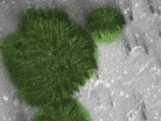 【衝撃】火星で「巨大な樹木」が育ちまくっている決定的証拠画像!