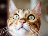 【衝撃】猫の寄生虫トキソプラズマに感染すると「起業家」になりやすい!?  やはり腸内環境は精神に影響か!?