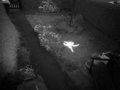 ロンドンの監視カメラに「純白の完全なる妖精」が映り込む! 手、足、頭もクッキリ…複数枚激写される!