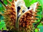 """世界最凶の植物9選! 痙攣、昏睡、幻覚、激痛…""""死の木""""から6メートルの巨大有害雑草まで!"""
