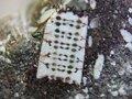 【衝撃】2億5千年前の「マイクロチップが埋め込まれた化石」が存在していた! 古代宇宙人のテクノロジーか、結論は?