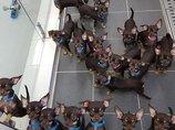 世界で一番クローンされている犬「ミラクル・ミリー」がヤバすぎる! 戦慄のクローンペットビジネス最前線!