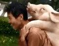 洪水で溺死寸前の豚を住民総出で救出! しかし、実は「おいしくいただきました」⁉