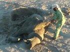 【閲覧注意】「自分の墓を掘る」赤ちゃんゾウが憐れすぎる! 猛暑の影響か、水を求めた「必死の自殺行為」に戦慄!