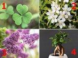 【心理テスト】好きな植物を選んでわかる「あなたの夢を叶える方法」! 今日から人生がうまくいく… Love Me Doが徹底指南!