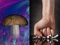 「禁煙にはマジックマッシュルームが効果的」最新研究が衝撃的すぎる! 幻覚成分で離脱症状も緩和することが判明!