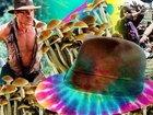 「大麻に続き、LSDやMDMAも10年後には解禁される」サイケデリック・インディ・ジョーンズと呼ばれる学者が主張!