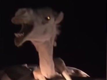 【閲覧注意】史上最も奇妙な「ラクダと自動車の交通事故」!  巨体が完全にハマって悲鳴… 信じられない合体風景=インド