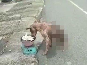 【閲覧注意】「前足だけの犬」の食事光景がヤバすぎる! 逞しく生きる姿に号泣、環境汚染が原因か?=中国