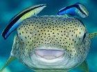 魚は犬猫より頭が良い!? 熱帯魚が鏡を使った自己認知テストに合格、科学界に衝撃広がる(最新研究)