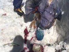 31年前に雪山で遭難した女性の「氷漬けミイラ」