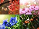 【心理テスト】心惹かれる秋の植物を選んで「あなたが囚われているもの」が完全判明! 今すぐ解放される方法をLove Me Doが伝授!